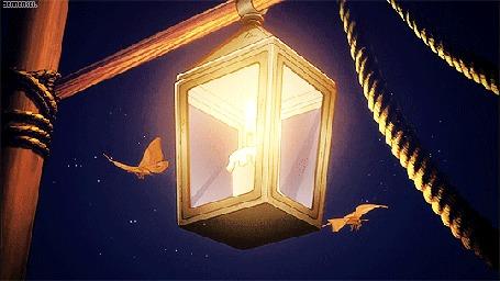 Анимация Светящийся фонарь, вокруг которого летают бабочки