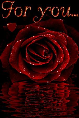 Анимация Красная роза у воды.(Для тебя. For you) (© dixinox), добавлено: 24.06.2016 00:14