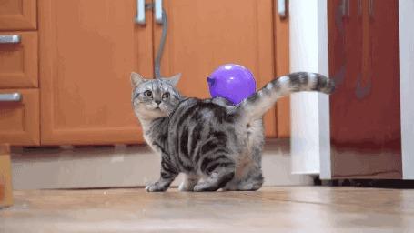 Анимация Серый в полосочку кот с воздушным шариком на спине