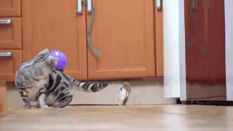Анимация Коты с воздушным шариком на спине