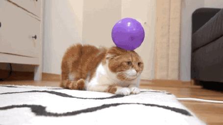 Анимация Кот с воздушным шариком на голове