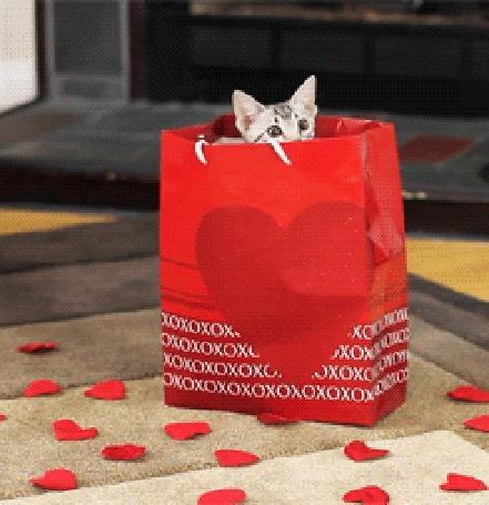 Анимация Серый котенок сидит в подарочном пакете, стоящем на полу с выложенными красными сердечками, пытается из него вылезти и пакет падает,