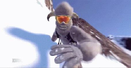 Анимация Сноубордисты в костюмах, из игры Steep