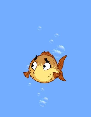 Анимация Напуганная рыба-еж раздулась под водой