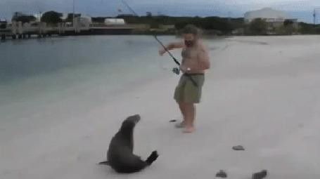 Анимация Тюлененок пытается отнять у рыбака его улов