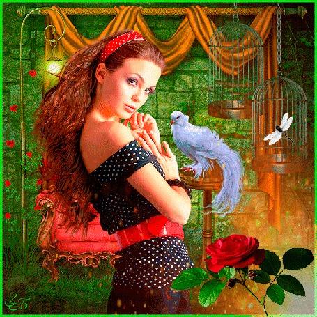 Анимация Шатенка с длинными волосами с красным ободком в волосах, кофточке в горошек на фоне розы, белого голубя и стрекозы в клетке