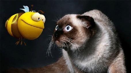 Анимация Сиамская кошка с испугом смотрит на летающую пчелу