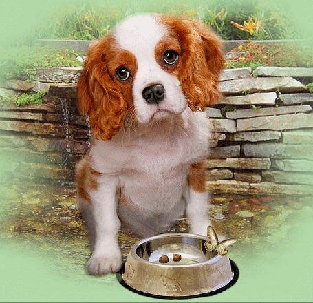 Анимация Собака сидит у миски с сухим кормом, на краю миски сидит бабочка на фоне кладки из камней