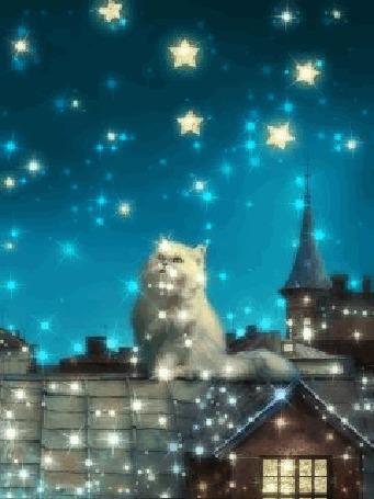 Анимация Кот сидит на крыше и смотрит на звездное небо / автор А777