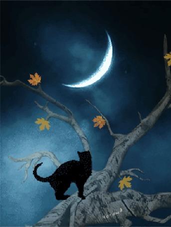 Анимация Черный кот на дереве трогает лапой месяц, превращающийся в чеширского кота, Наташа