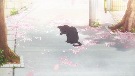 Анимация Котенок сидит на дороге под падающими весенними лепестками и умывается, аниме мSoredemo Sekai wa Utsukushii / Твоя апрельская ложьhttps://new. vk. com / album-69497349_202749698