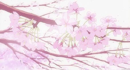 Анимация Падающие лепестки сакуры (© HiRoshi), добавлено: 05.08.2016 12:46