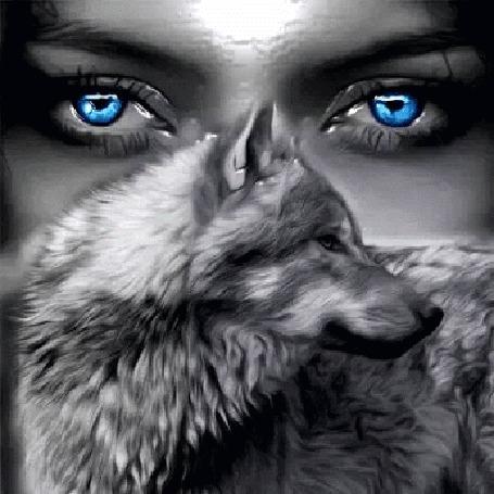 Анимация Голубые глаза девушки на фоне волка