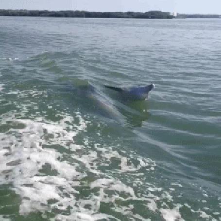 Анимация Дельфины плывут по воде моря