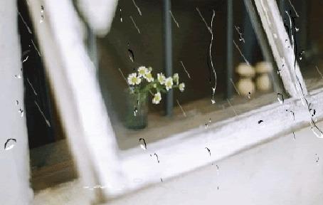 Анимация На подоконнике окна, за которым идет дождь, стоят ромашки