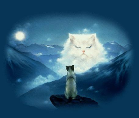 Анимация Кошка сидит на скале в горах и наблюдает за белой кошкой с голубыми глазами, созданную из тумана