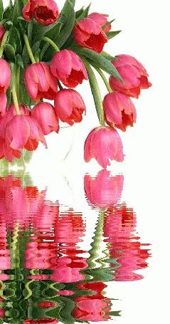 Анимация Розовые тюльпаны над водой