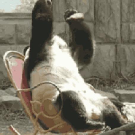 Гифка парень в кресле качалке