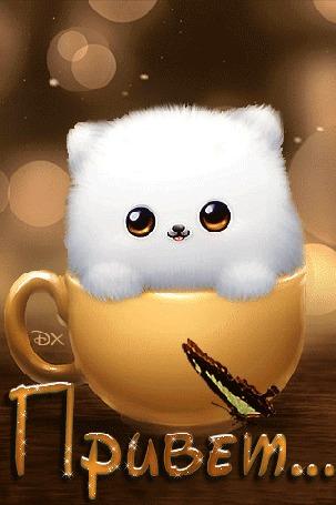 Анимация Белый котенок сидит в чашке и моргает глазками. На слове Привет бабочка машет крыльями