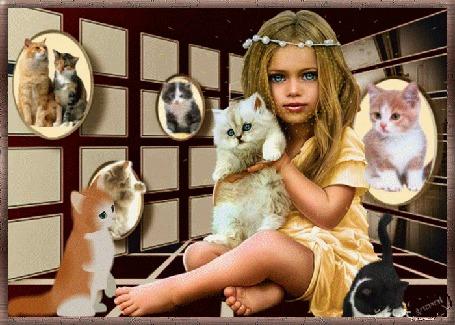Анимация Голубоглазая девочка сидит с белой кошкой на руках, на фоне стены с фотографиями кошек, возле нее резвятся котята, by Gosia