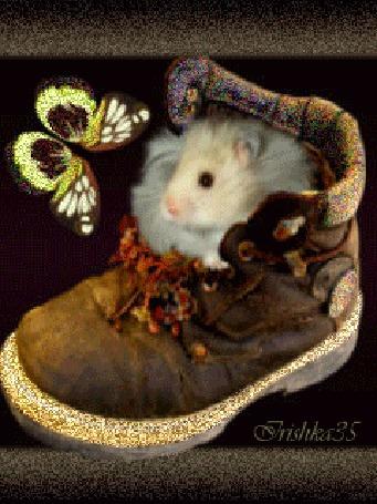 Анимация Хомячок сидит в ботинке и любуется бабочкой