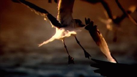 Анимация Чайки летят над водой, стая парит над побережьем