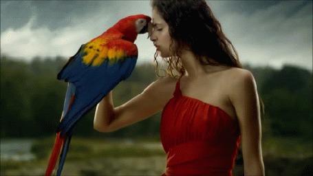 Анимация Девушка с попугаем на руке, кадры видео Welcome to Mexico Estrellas del Bicentenario