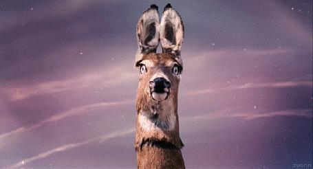 Анимация У кенгуру вылазят из глаз телескопические подзорные трубы