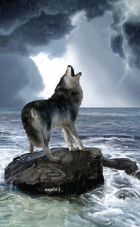 Анимация Волк стоит на камне на берегу моря и воет на фоне грозового неба