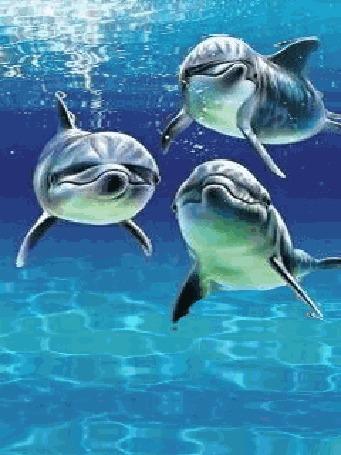 Анимация Три дельфина под водой