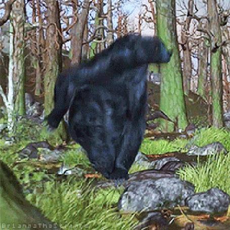 Анимация Королева Элинор, превращенная ведьмой в медведя, бежит по лесу, мультфильм Храбрая сердцем / Brave