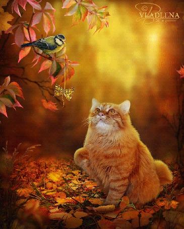 Анимация Синичка дразнит рыжего кота бантиком на нитке, by Vladlena111
