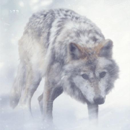 Анимация Волк под падающим снегом