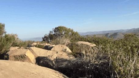 Анимация Собака, подстриженная под льва, стоит на холме