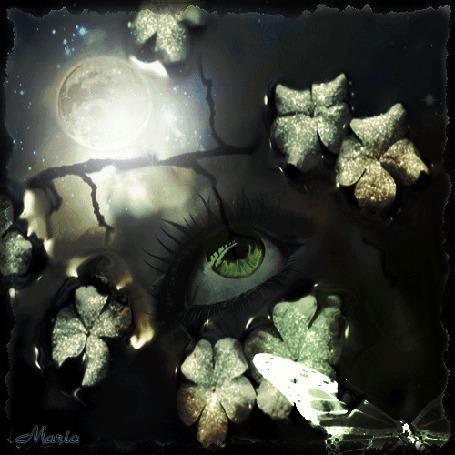 Анимация Лицо девушки отражается в воде с листьями и бабочкой