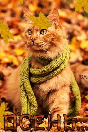 Картинки блестяшки веселой осени