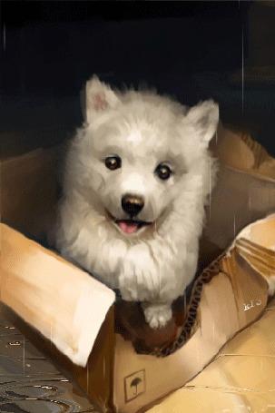 Анимация Милый щенок сидит в коробке на асфальте, by SalamanDra