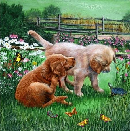 Анимация В саду с деревянной изгородью на полянке среди цветов и бабочек два щенка играют с черепахой