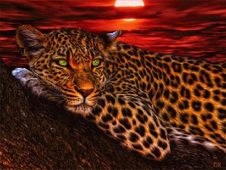 Анимация Леопард лежит на дереве, на фоне заката