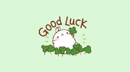 Анимация Molang rabbit / Кролик Моланг достает листок четырехлистного клевера среди трехлистных клеверов и радостно машет им (Good Luck / Удача)