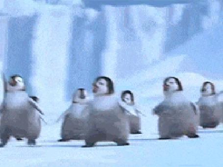 Анимация Пингвины весело пляшут на льду
