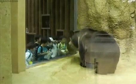 Анимация Медведь машет головой в такт песни, исполняемой школьниками, которые пришли посмотреть на него в зоопарке