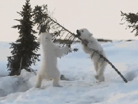 Анимация Белая медведица с медвежатами, играющими на снегу