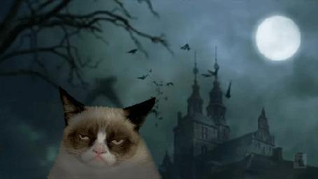 Анимация Grumpy Cat / Сердитый Кот На фоне полной луны, старинного замка и летучих мышей в небе в праздник Хэллоуина