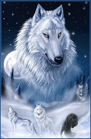 Анимация Стая волков сидит на снегу, на фоне своего вожака