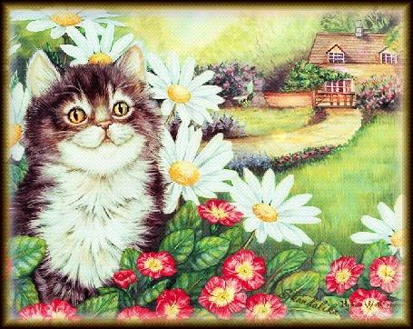 Анимация Кошка на фоне цветов, дороги идущей к дому