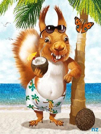 Анимация Белка в темных очках на лбу, пьет кокосовый сок, прислонившись к пальме, на которой сидит бабочка на фоне моря, by nz