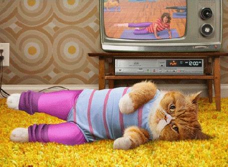 Анимация Кот занимается гимнастикой на ковре под руководством передачи по телевизору