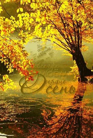 Анимация Деревья, склоненные под осенним дождем (Всегда в моем сердце осень)