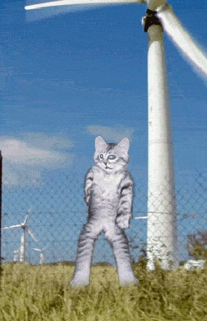 Анимация Кот стоит под вентилятором и танцует